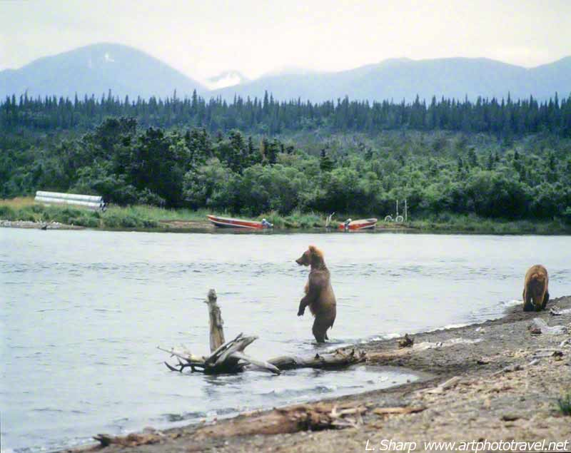 brooks-falls-from-viewing-platform-Katmai