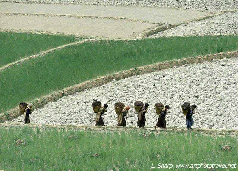 villagers-crossing-fields-central-bhutan