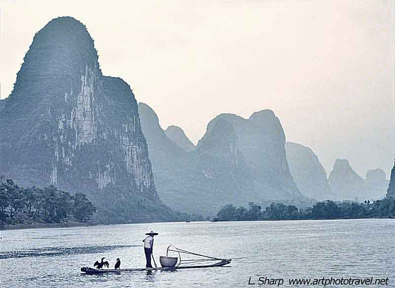 cormorant fishing on the Li River near Xingping
