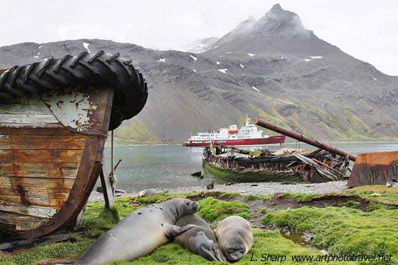 symbols Grytkevin whaling South Georgia Island