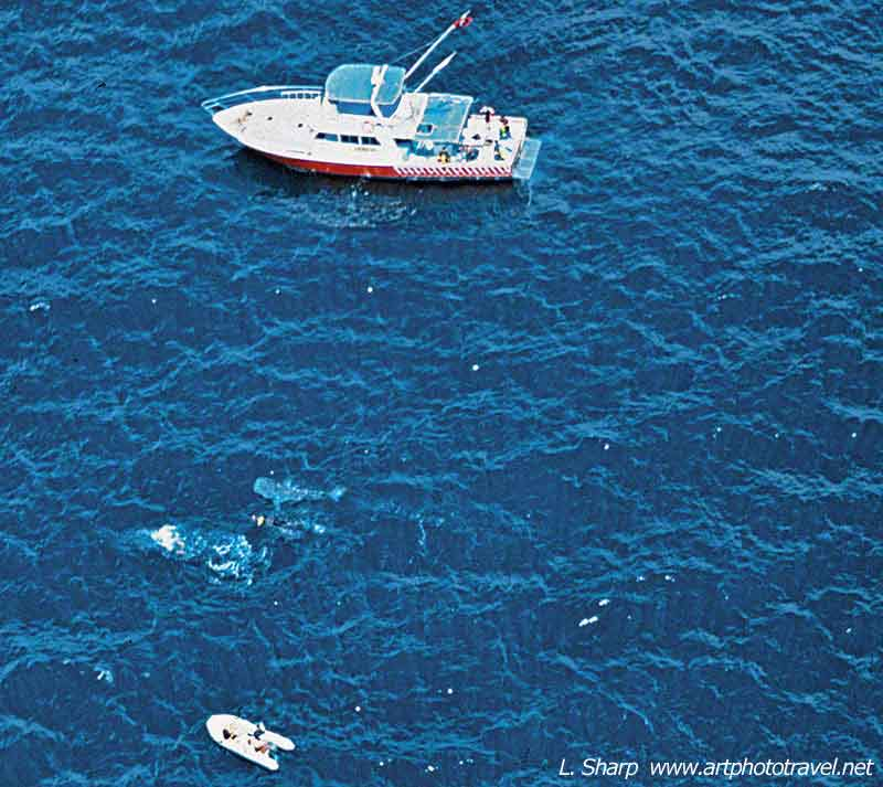 whale-shark-and-boat-view-from-air