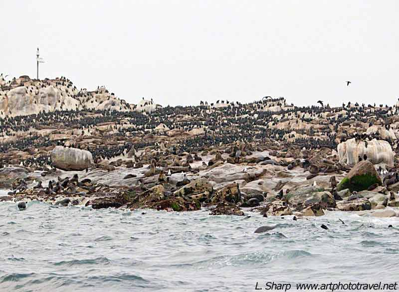 seal island false bay
