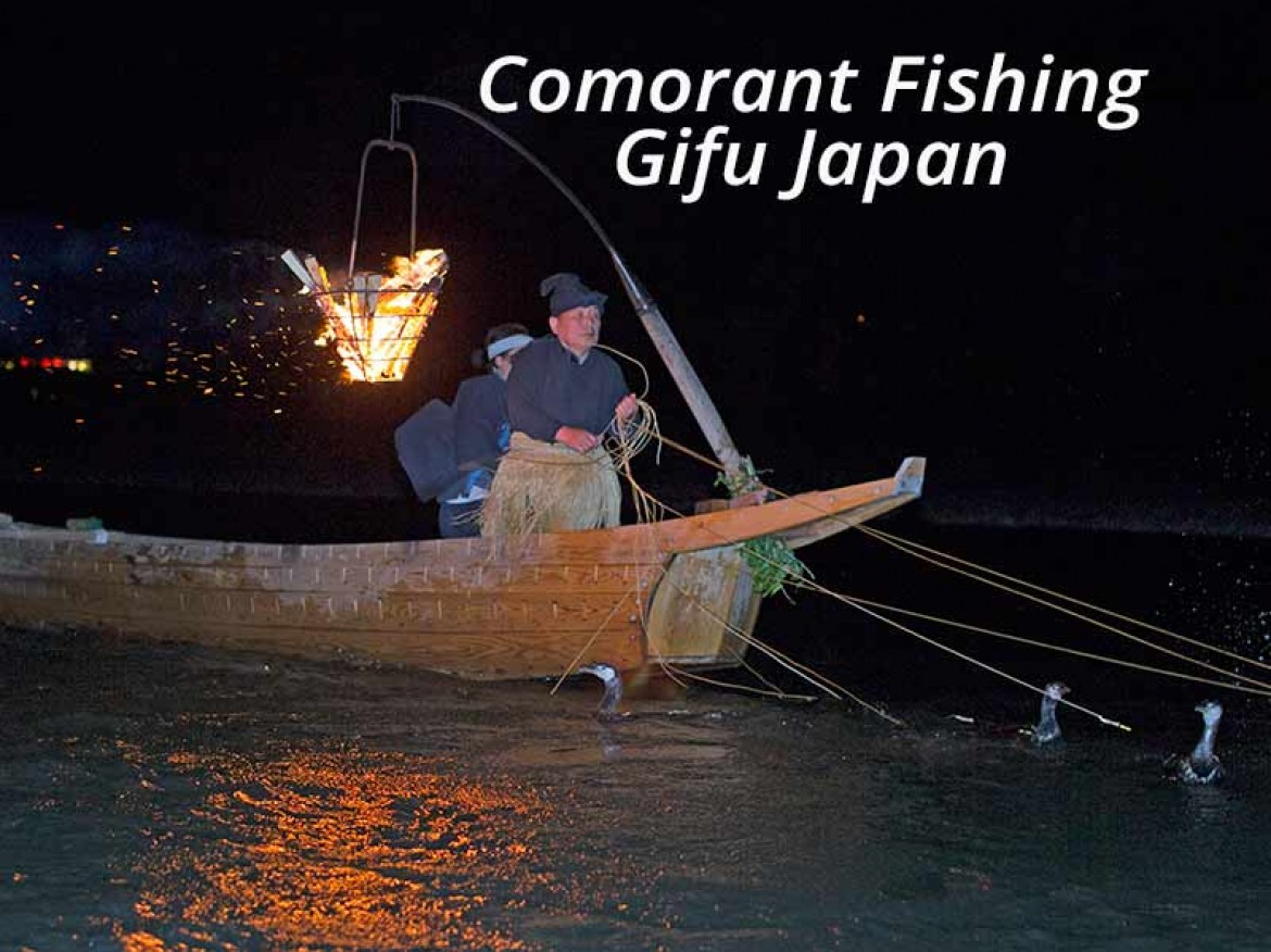 cormorant fishing on Nagara river gifu japan