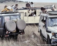 Safari cars and cheetah maasai mara
