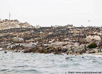 Seal Island, False Bay