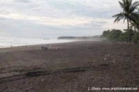 Ostional beach looking north at central access costa rica