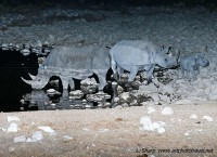 rhino at Okaukuejo waterhole at night etosha