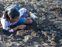 harvesting turtle eggs at ostional costa rica
