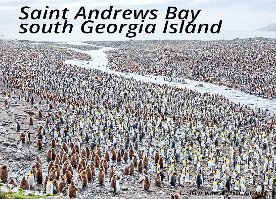 saint andrews bay south georgia island