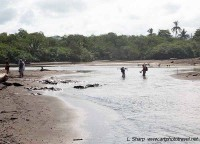 wading creek to access southern part Ostional beach costa rica