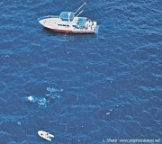 Whale shark and boat, view from spotter plane ningaloo reef australia